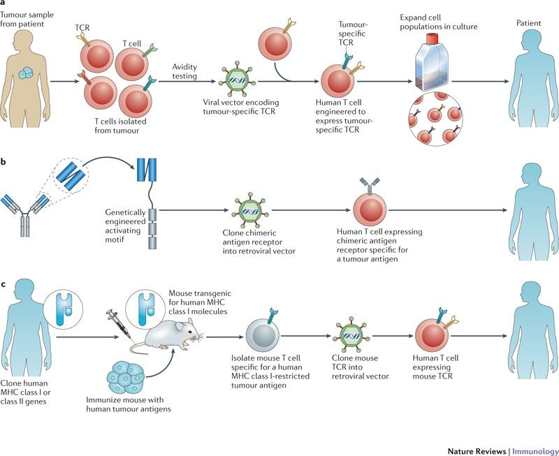 adoptive t cell therapy review